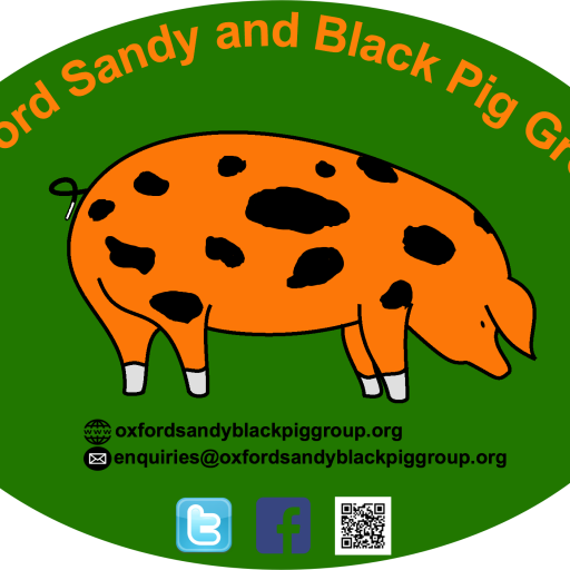 Pig Terminology – Oxford Sandy and Black Pig Group
