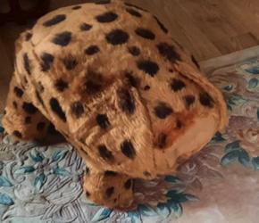 Very cuddly Teddy Pig
